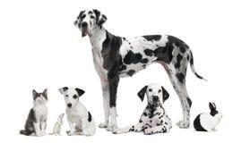 Ritratto del gruppo degli animali in bianco e nero Fotografia Stock Libera da Diritti