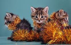 Ritratto del gruppo di Natale dei gattini Fotografia Stock