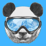 Ritratto del panda con gli occhiali di protezione dello sci Fotografia Stock