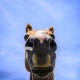 Ritratto del primo piano del cavallo Immagine Stock Libera da Diritti