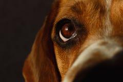 Ritratto del primo piano di un cane che si siede su un letto del cane fotografia stock libera da diritti