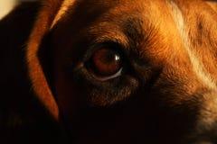 Ritratto del primo piano di un cane che si siede su un letto del cane fotografie stock libere da diritti