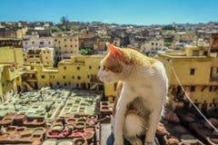 Ritratto del primo piano del gatto di calicò, sedentesi fuori sulla parete che esamina lato immagini stock