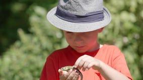 Ritratto del ragazzino felice che tiene una lucertola in sue mani, animali di amore stock footage