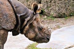 Ritratto del rinoceronte fotografie stock