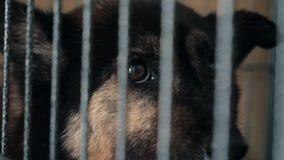 Ritratto del riparo triste del cane n dietro il recinto che aspetta per essere salvato e per adottato alla nuova casa Riparo per  archivi video
