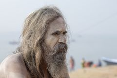 Ritratto del sadhu di Shaiva, uomo santo sui ghats del Gange a Varanasi, India Fine in su fotografia stock libera da diritti