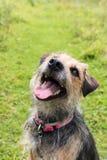 Ritratto del terrier nel campo Immagini Stock Libere da Diritti
