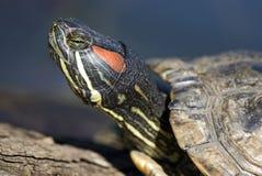Ritratto del tortoise immagini stock libere da diritti