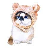 Ritratto dell'acquerello del gattino sveglio in cappello con le orecchie su fondo bianco Animale domestico domestico dolce disegn Fotografie Stock
