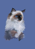 Ritratto dell'acquerello del vettore dell'illustrazione del gatto Fotografie Stock Libere da Diritti