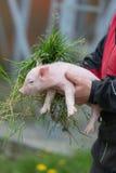 Ritratto dell'agricoltore che lavora nell'azienda agricola Fotografia Stock Libera da Diritti
