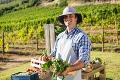 Ritratto dell'agricoltore felice che tiene una cassa degli ortaggi freschi Fotografia Stock Libera da Diritti