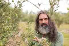 Ritratto dell'agricoltore felice osservando oliva d'esame Fotografie Stock Libere da Diritti