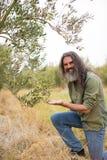 Ritratto dell'agricoltore felice osservando oliva d'esame Fotografia Stock