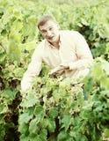 Ritratto dell'agricoltore maschio vicino all'uva in vigna Fotografie Stock Libere da Diritti
