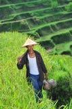 Ritratto dell'agricoltore organico tradizionale del riso con i suoi strumenti Immagine Stock