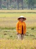 Ritratto dell'agricoltore vietnamita che lavora al riso Immagine Stock