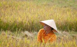 Ritratto dell'agricoltore vietnamita che lavora al riso Immagini Stock