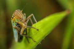 Ritratto dell'ape Fotografia Stock