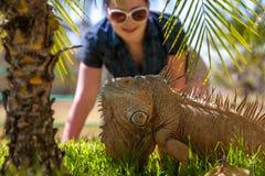 Ritratto dell'iguana tropicale Immagini Stock Libere da Diritti