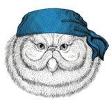 Ritratto dell'immagine d'uso della bandana o della bandana o del bandanna dell'animale selvatico lanuginoso del gatto persiano pe Fotografia Stock