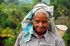 Ritratto dell'operaio del tè del Tamil Fotografia Stock