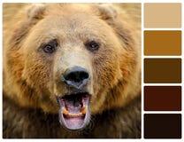 Ritratto dell'orso con i campioni di colore della tavolozza Fotografia Stock