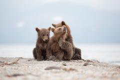 Ritratto dell'piccoli orsi adorabili Immagine Stock Libera da Diritti