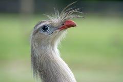 Ritratto dell'uccello Immagine Stock Libera da Diritti