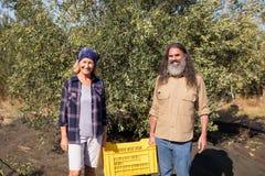 Ritratto della cassa felice della tenuta delle coppie in azienda agricola verde oliva Immagine Stock Libera da Diritti