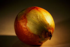 Ritratto della cipolla Immagine Stock Libera da Diritti