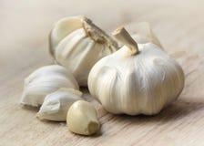 Ritratto della lampadina dell'aglio in cucina Immagini Stock Libere da Diritti
