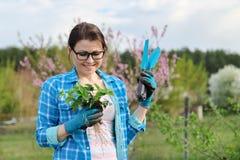 Ritratto della primavera della donna matura in giardino con gli strumenti, cespugli di fragola fotografie stock