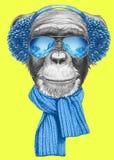 Ritratto della scimmia con la sciarpa, la cuffia e gli occhiali da sole Fotografie Stock Libere da Diritti