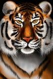 Ritratto della tigre Illustrazione di Stock