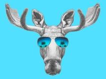 Ritratto delle alci con gli occhiali da sole dello specchio Fotografia Stock Libera da Diritti