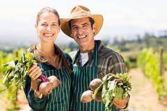 Ritratto delle coppie felici dell'agricoltore che tengono gli ortaggi freschi Immagini Stock