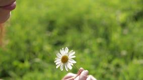Ritratto di bella donna che odora un fiore archivi video