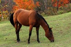 Ritratto di bello cavallo Immagini Stock Libere da Diritti