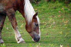 Ritratto di bello cavallo Fotografia Stock