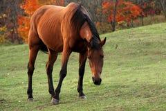 Ritratto di bello cavallo Immagine Stock