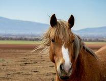 Ritratto di bello cavallo con gli occhi astuti, la criniera brillante del cavallo che spruzza sull'aria illustrazione vettoriale