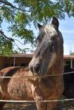Ritratto di bello cavallo selvaggio fotografia stock