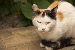 Ritratto di bello gatto dello zenzero che riposa sotto un cespuglio nel g fotografia stock