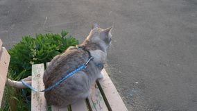Ritratto di bello giovane gatto biondo archivi video