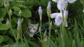 Ritratto di bello giovane gatto biondo video d archivio