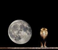 Ritratto di bello leone, leone nello scuro Immagini Stock