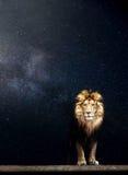 Ritratto di bello leone, notte stellata Immagine Stock Libera da Diritti