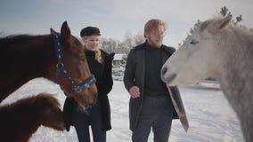 Ritratto di giovane coppia che segna i cavalli su un ranch del paese nella stagione invernale Un uomo e una donna che camminano c video d archivio